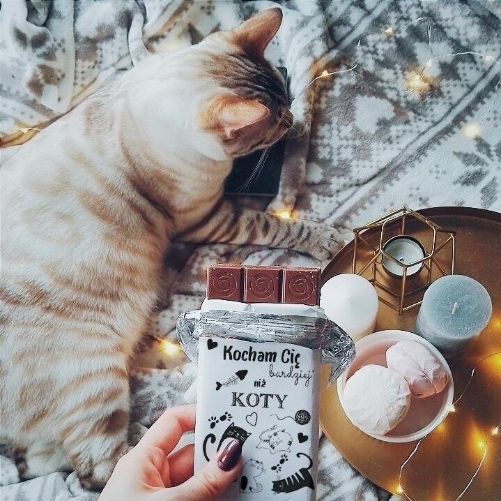 Zdjęcie w galerii - CZEKOLADA kocham Cię bardziej niż koty