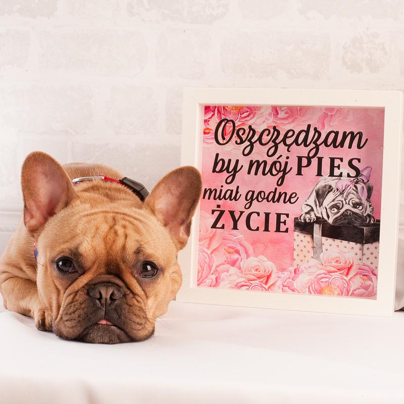 Zdjęcie w galerii - SKARBONKA 3D Oszczędzam Na Godne Życie Mojego Psa